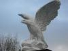 Adler groß